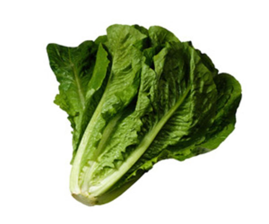 Romaine Lettuce Head C...